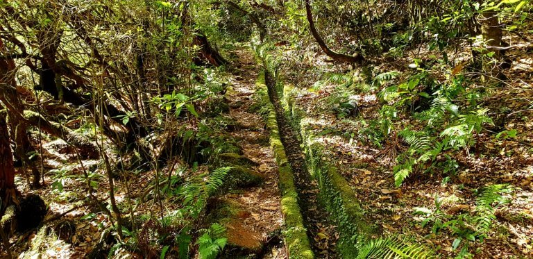 Old Levada without running water