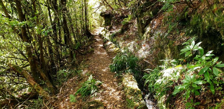 Old Levada coverd with plants