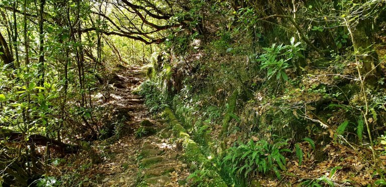 Old Levada coverd with plants and full of Rocks