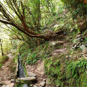 Start of a Levada
