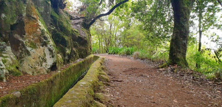 Wonderful Levada coverd with plants