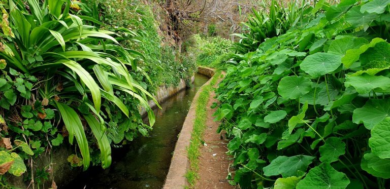 Famous Levada dos Tornos with green vagetation left and right