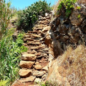 A stairway made out of stones with catuses on both sides.